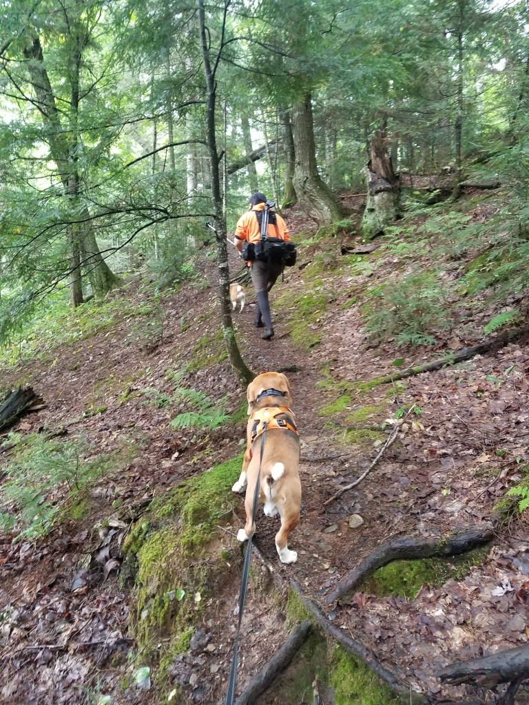 Beagles & Steve hiking the trail